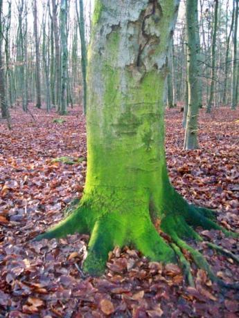 """Dieser Baum, mit seinem """"Moosstamm"""" hat es mir irgendwie total angetan."""