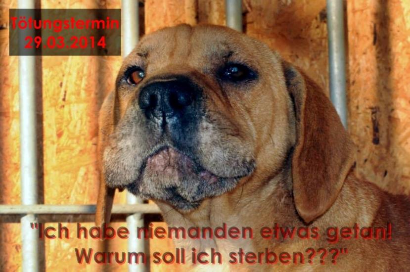 Nelly (Foto: tierheimleben-in-Not)