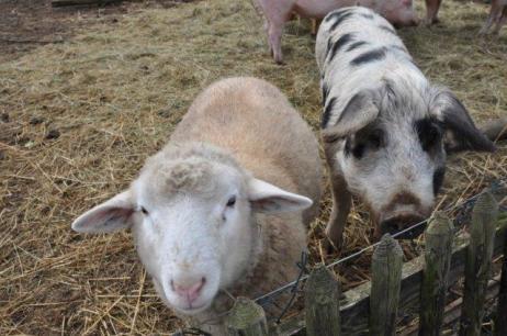 Jan & Oskar [Foto: Tierschutzbüro]