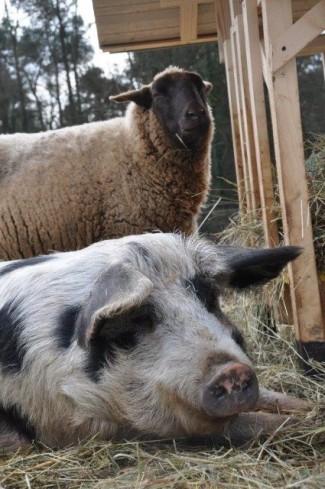 Jan & Röffle [Foto: Tierschutzbüro]