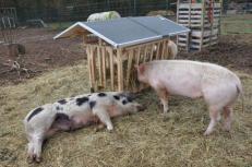 Foto: Tierschutzbüro