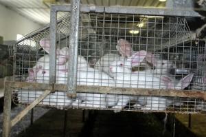 Foto: Dt. Tierschutzbüro