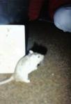 Mäuse-09