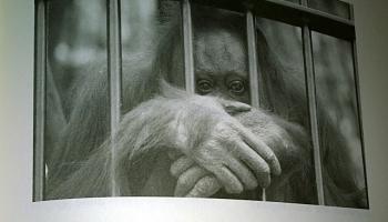 Affen bordell