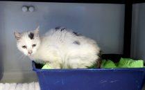 Foto: TierschutzvereinBremen